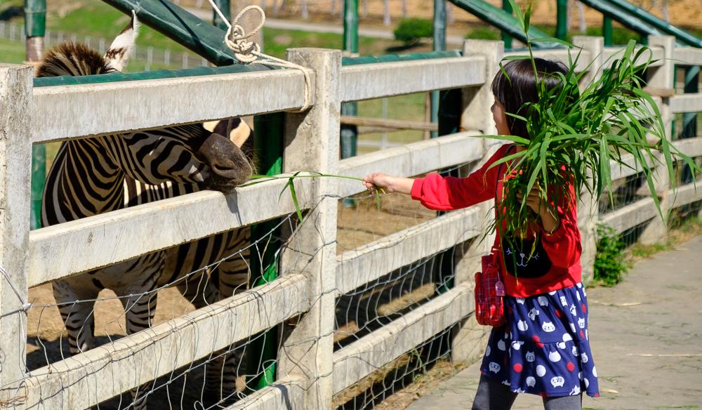 zebra's voederen