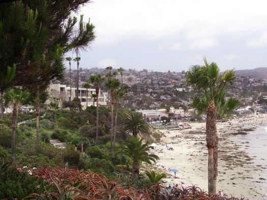 Laguna Beach Palm Trees Ocean Sea