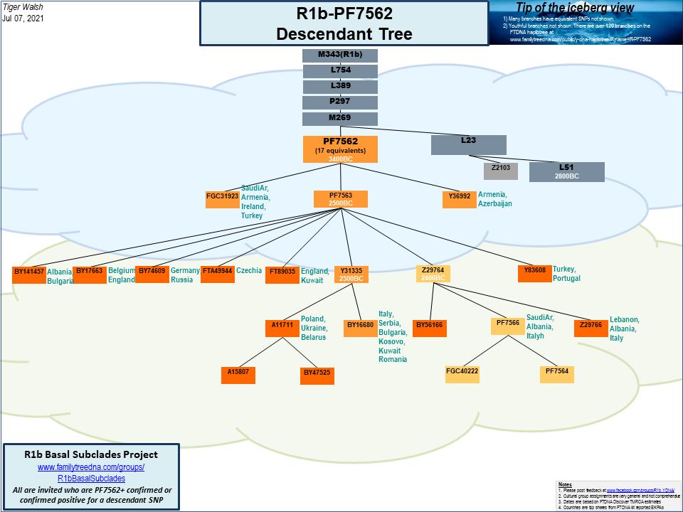R1b-PF7562