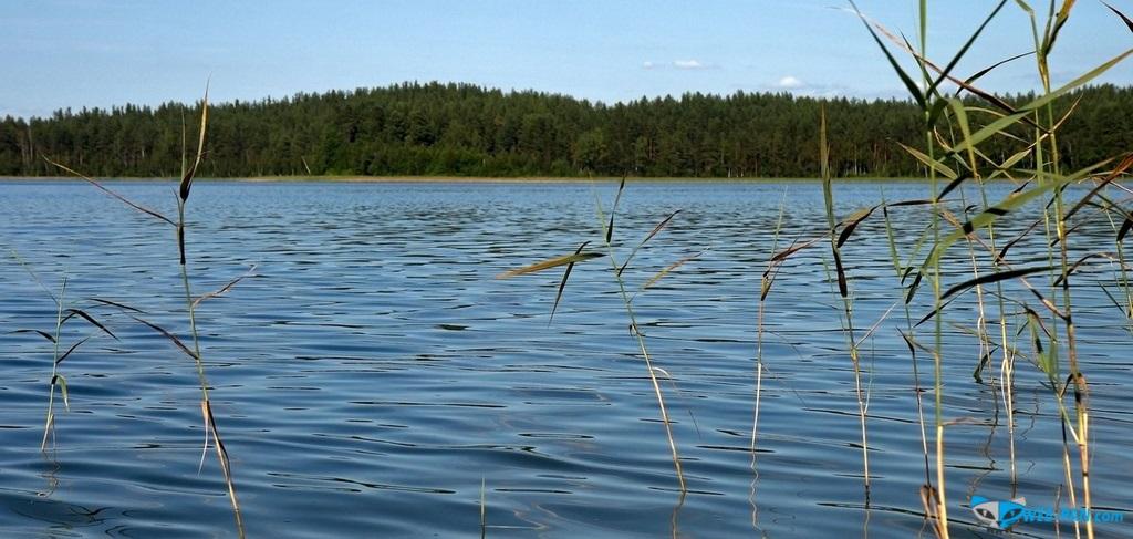 Прекрасные витебские озёра, я там жил более 5 лет и отдыхал у дедушки и бабушек!