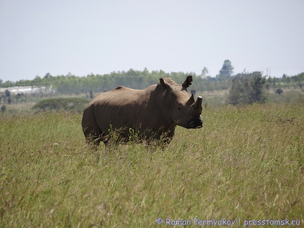 Семья носорогов