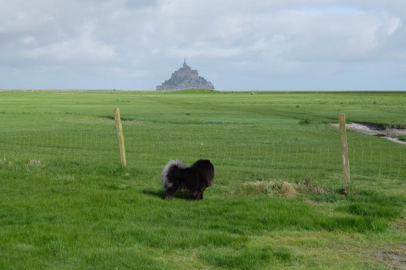 Один мой день из путешествия на кэмпинг вэне по северу Франции почти, острова, Этрета, Нормандии, сторону, Бретани, месте, барашков, парковаться, любом, которые, поехали, такая, красотой, пошли, ребят, приехали, фотографий, SaintMichel, место