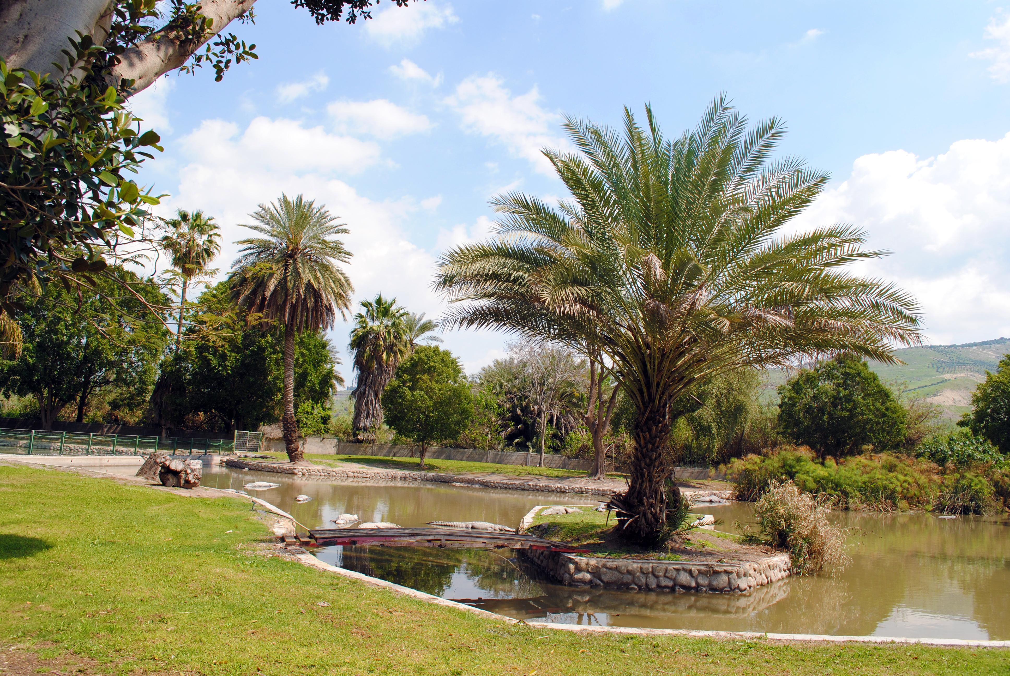 77д--Зоопарк-Хамат-Гадер