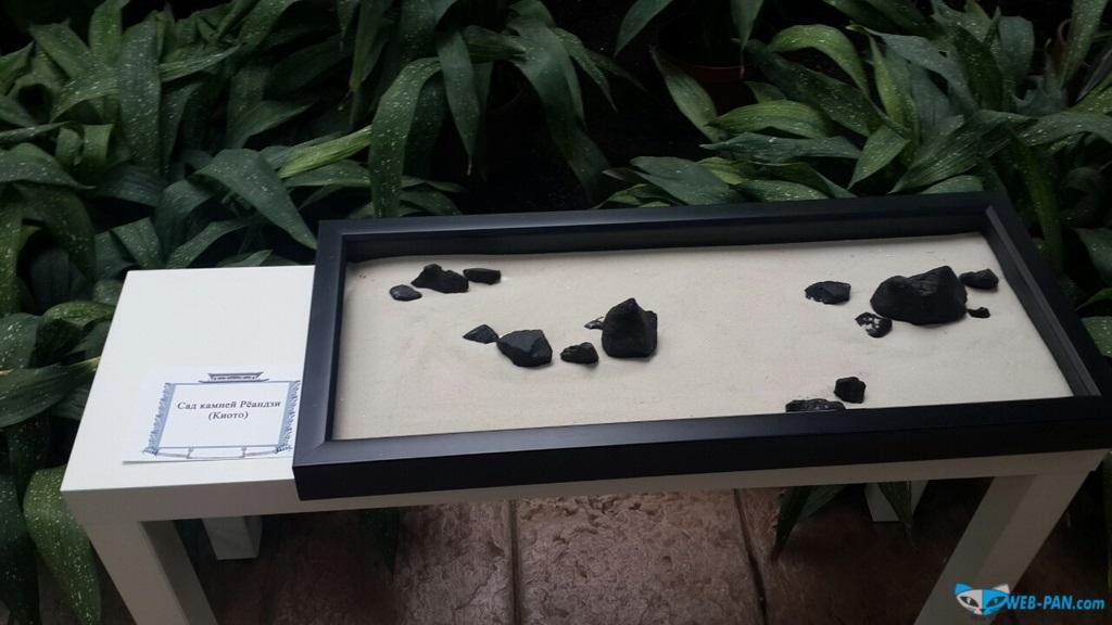 Бонсаи на выставке - фото 9