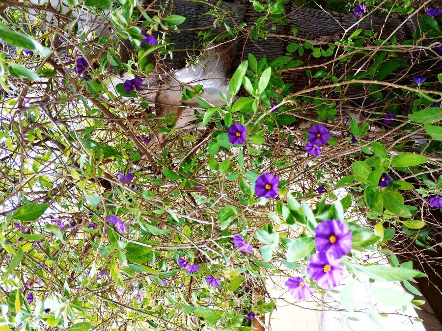 Кудри и завитки в Израильской природе (Ришон-леЦион, Тель-Авив, Герцлия)