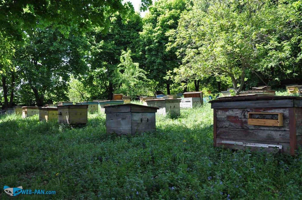Семейная пасека в лесу, сбор мёда!