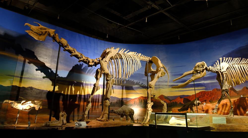 In het museum in Turpan was Thijs vooral blij met de dino's. Boys will be boys…