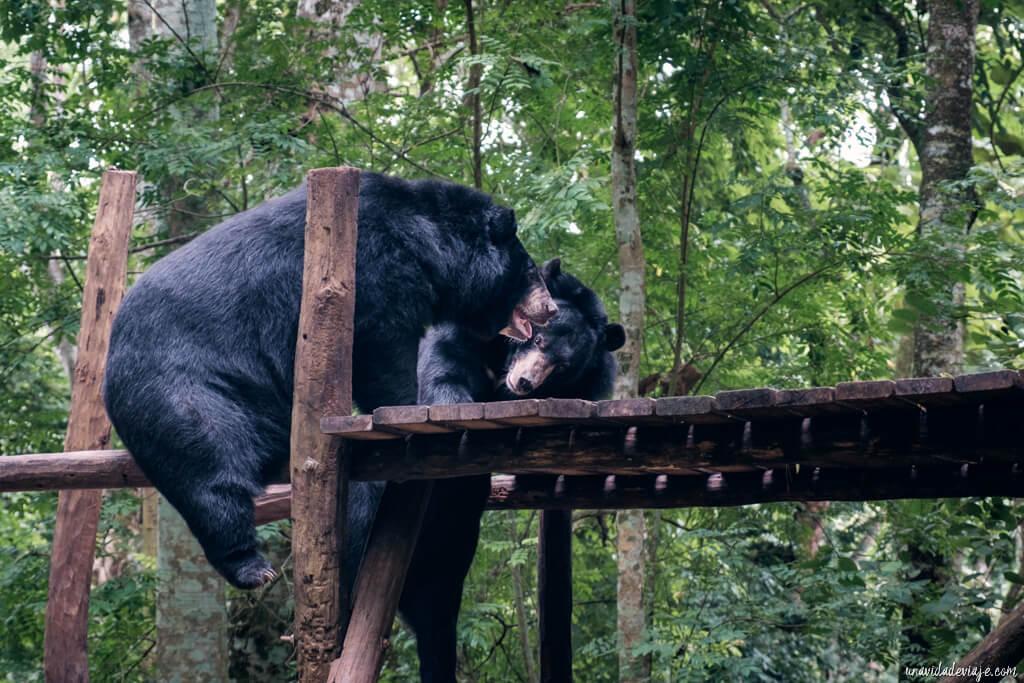 oso cataratas Kuang Si luang prabang