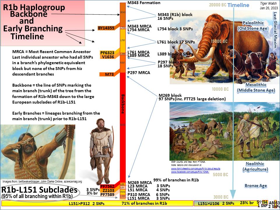 R1b Timeline