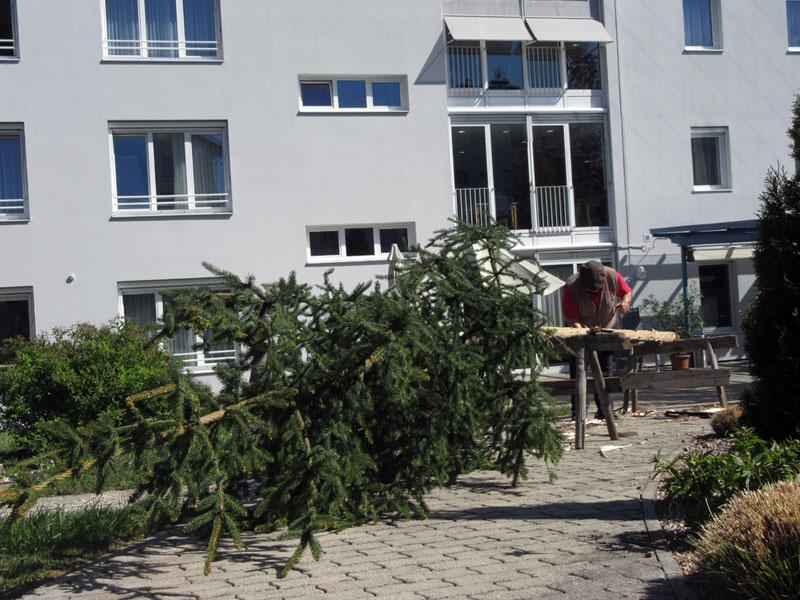 Karl beim Maibaum entrinden Bild 3