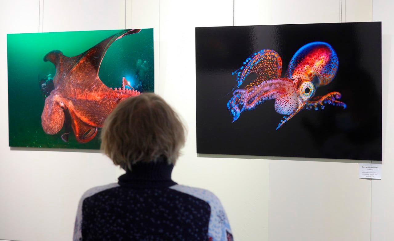 2021.02.05. Владивосток. Галерея Арт Этаж. Моя выставка. Она открылась.