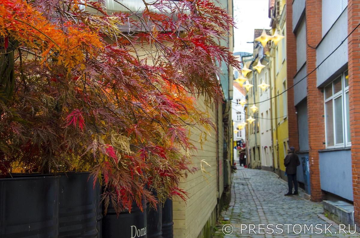 Улица Rozena