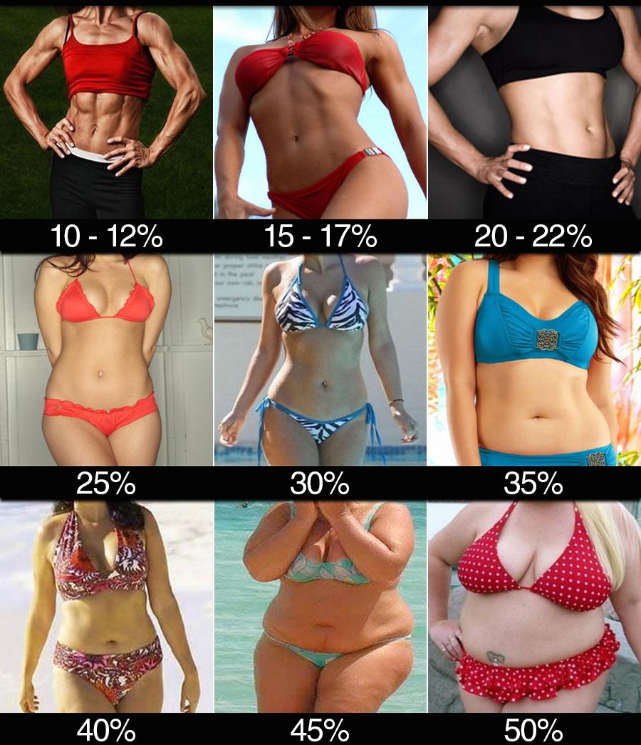 body fat percentage estimator women