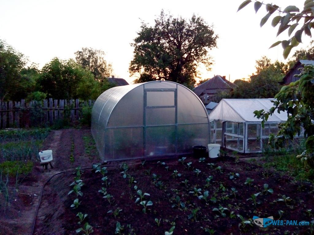 Теплица в огороде, помидоры, перцы и баклажаны уже свои!