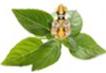 Dayabhai Maoji Majithiya Ayurved Mahavidyalaya, Yavatmal