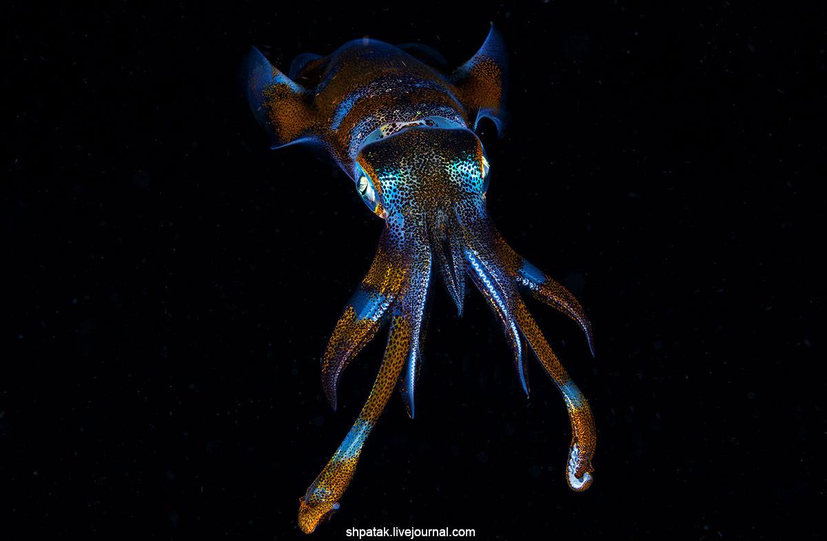 2018. Филиппины. Со всех точек. Негрос, осьминог, убегает, голове, своих, шесть, подбирает, опасности, Кокосовый, Отмеченно, случае, причем, кокосоовый, очень, течением, протягиваемый, мелкий, планктон, Искренне, ловит