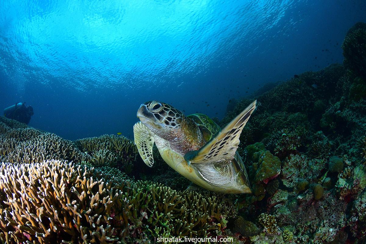2018. Моалбоал. Сардины и черепахи.