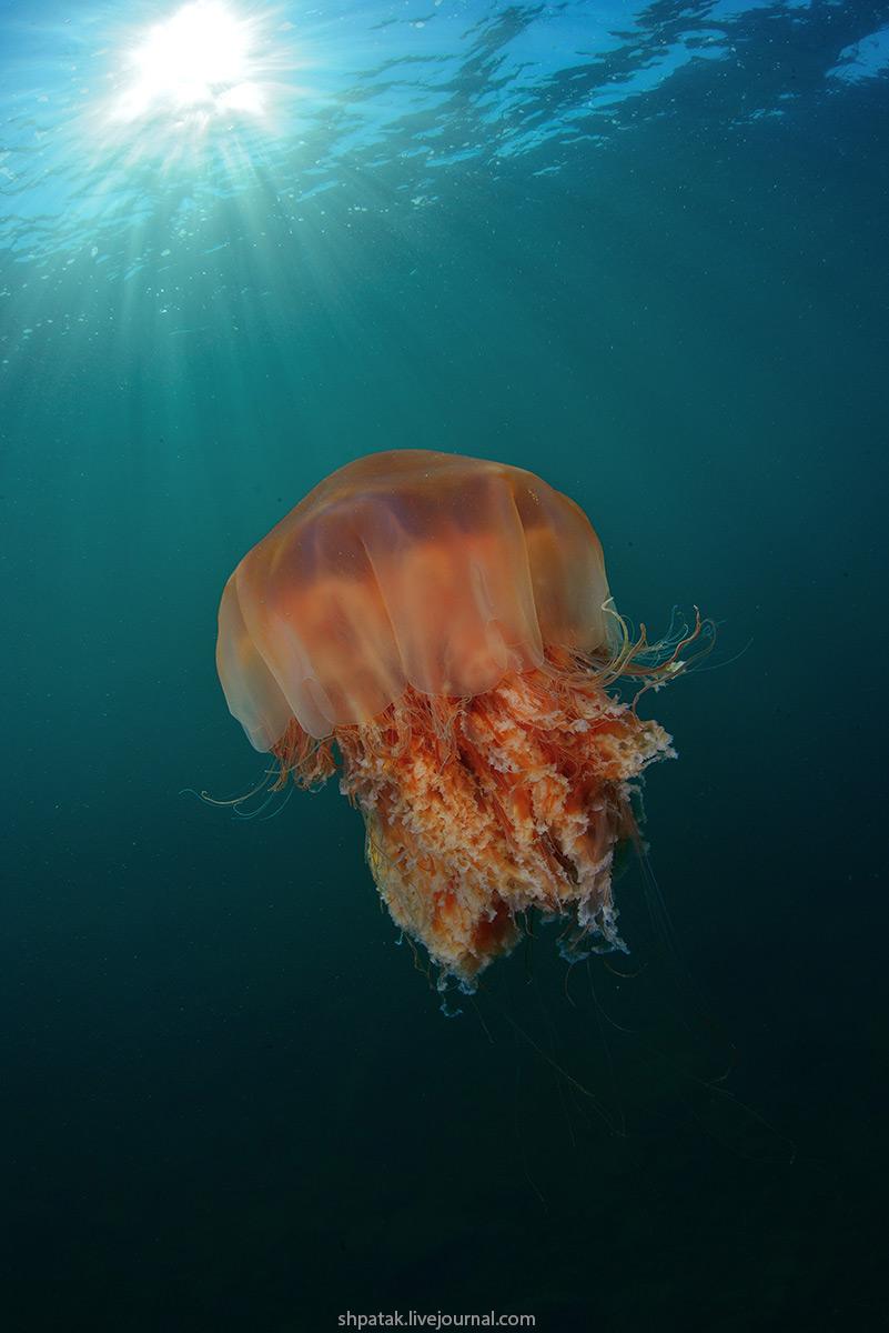 видишь медузы в хорватии фото бывшая перчинка