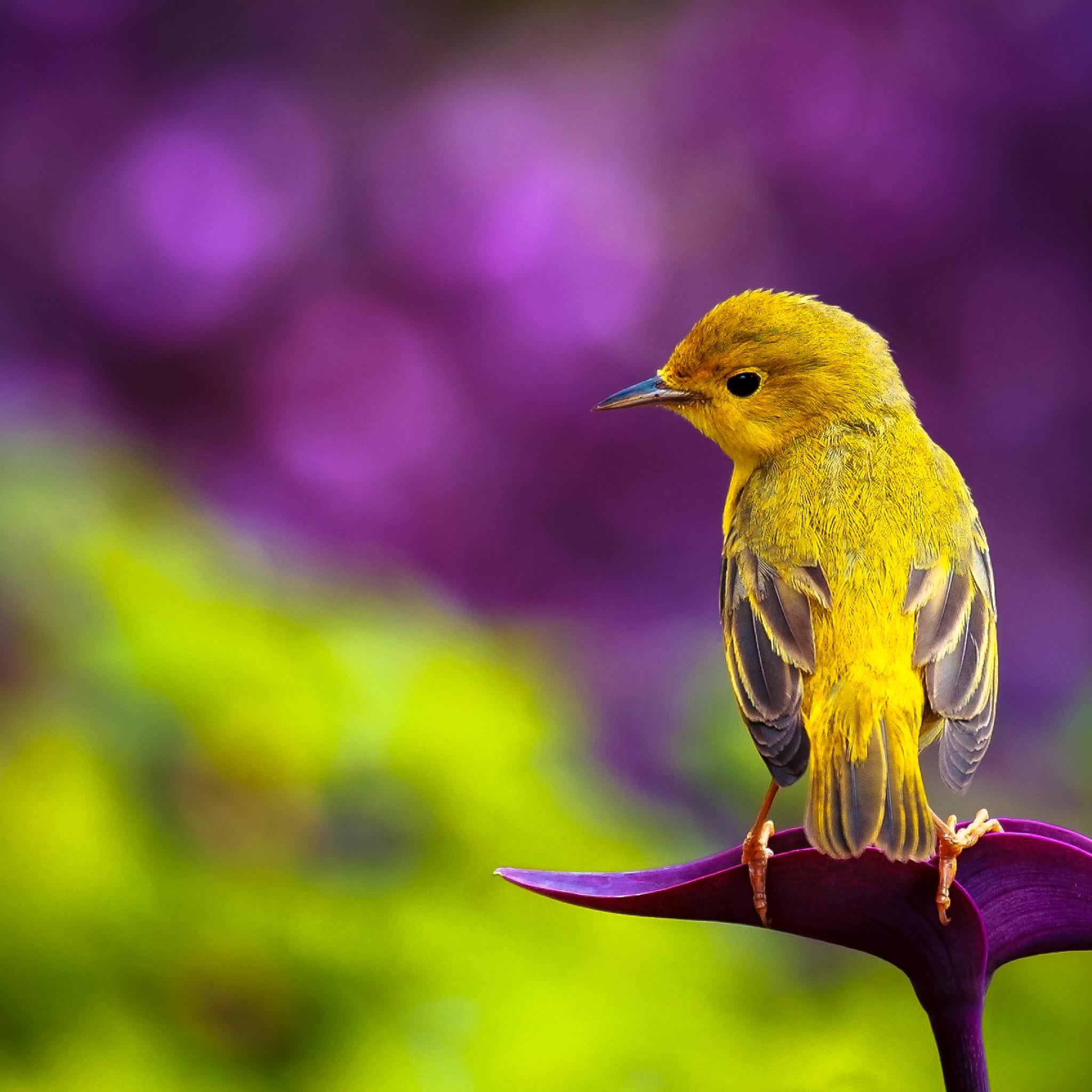 ★ Pretty Bird by @RetinaiPadWalls on twitter.jpg