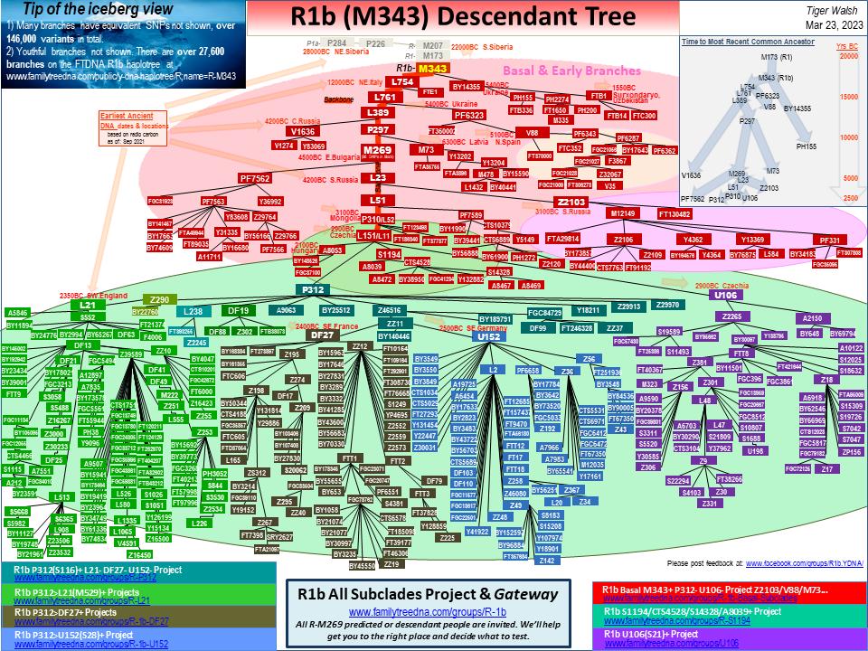 R1b Descendant Tree