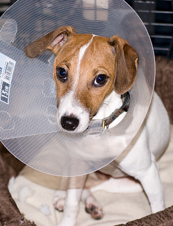 coneofshame.png