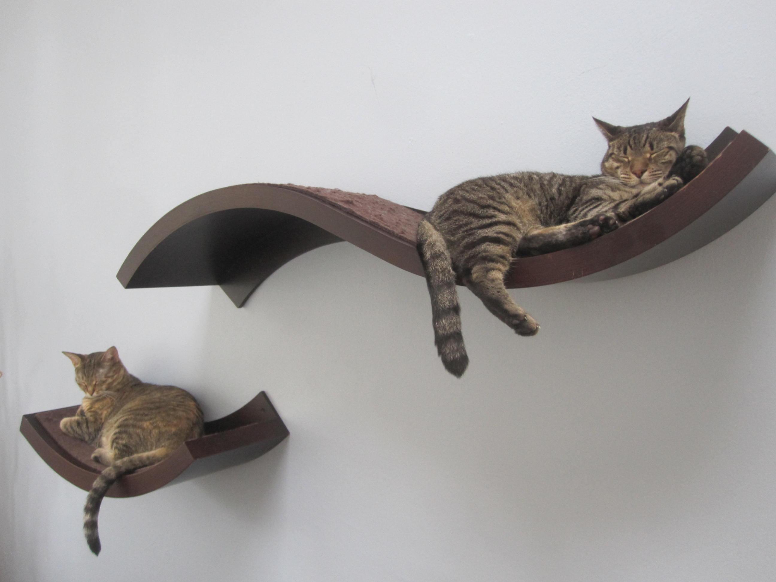 кот на полке cat on the shelf  № 1697926 бесплатно