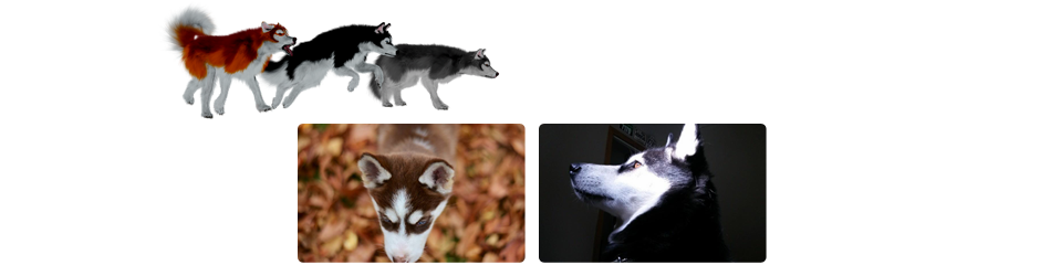 HuskyHeader