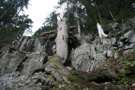 Schutzwaldsanierung sieht anders aus