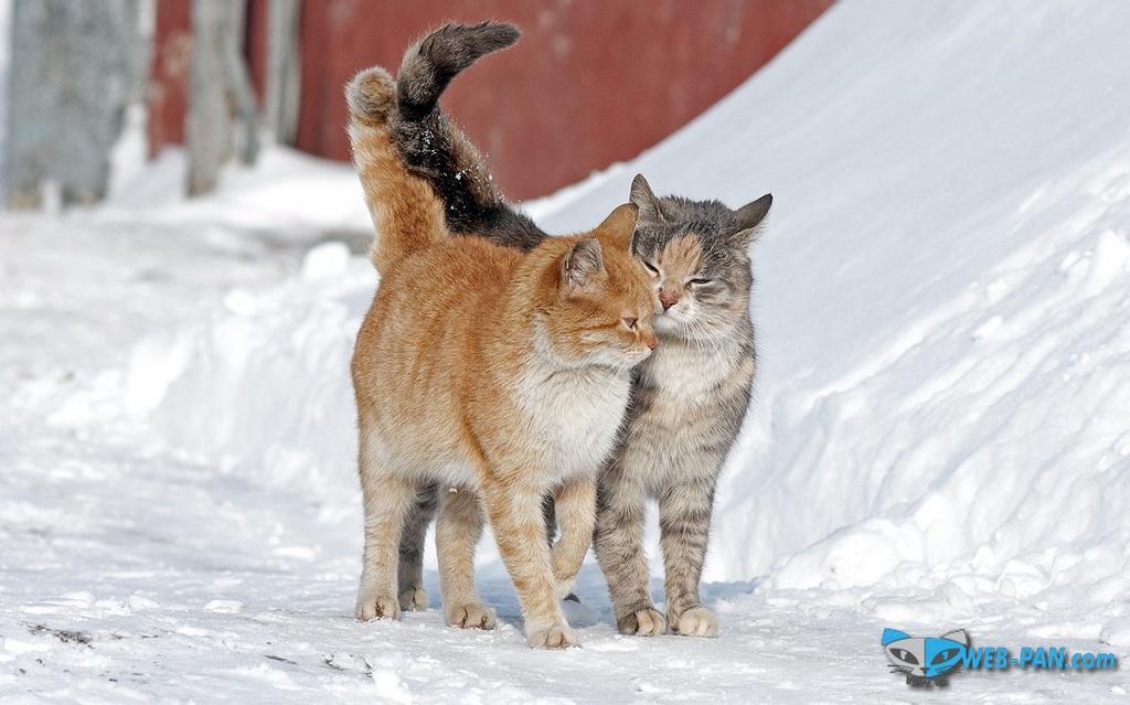 Мартовские котики уже тут, радуются весне!