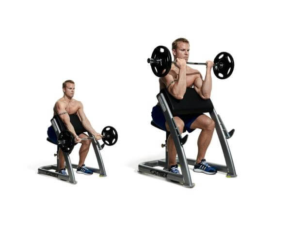 Preacher Curl And Reverse Preacher Curl Exercise To For ...