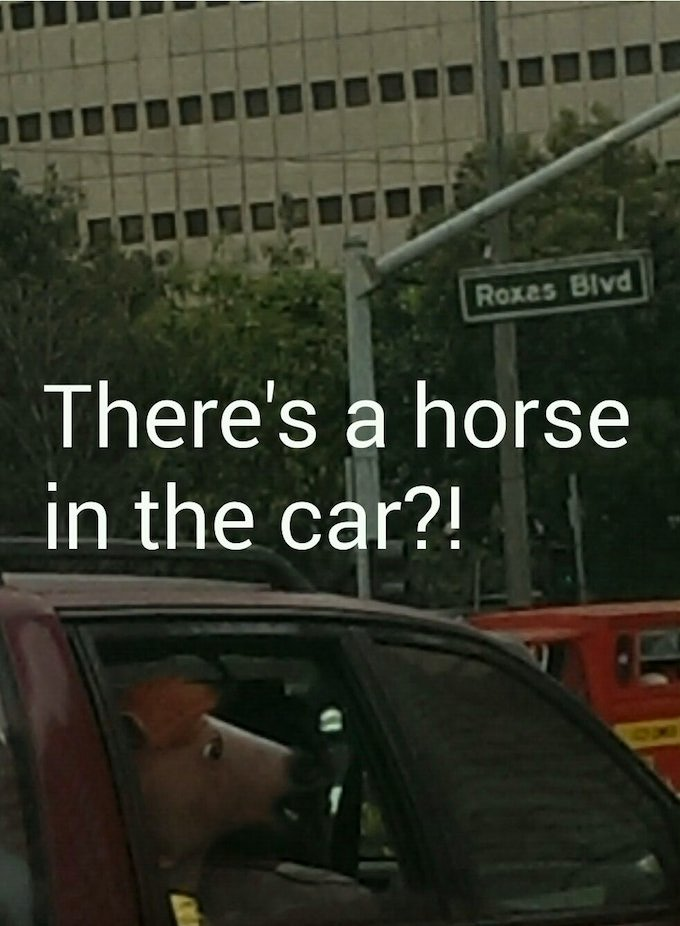 cover-image Horse in a car!