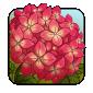 hydrangea2.png