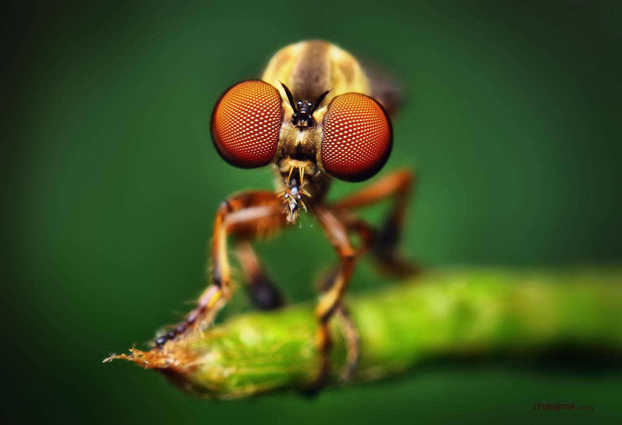 صور حشرات غريبة مذهلة 2013 - صور حشرات