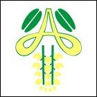 Amaltas Institute of Nursing Science