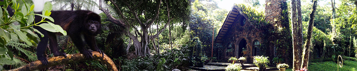 Selva Negra Cloud Forest Reserve