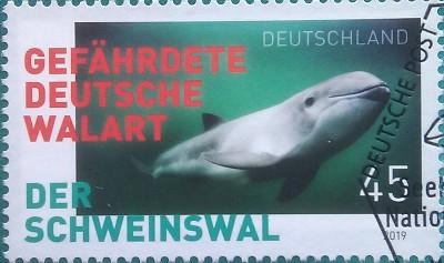 2019 кит на зел фоне 45