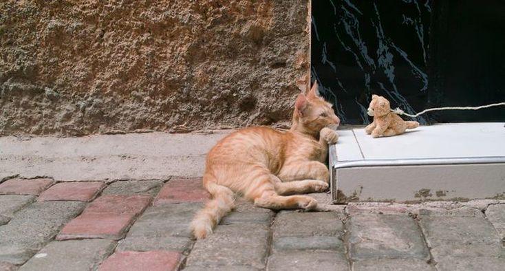 Katze und Kätzchen in Marrakesch - Cat Photography