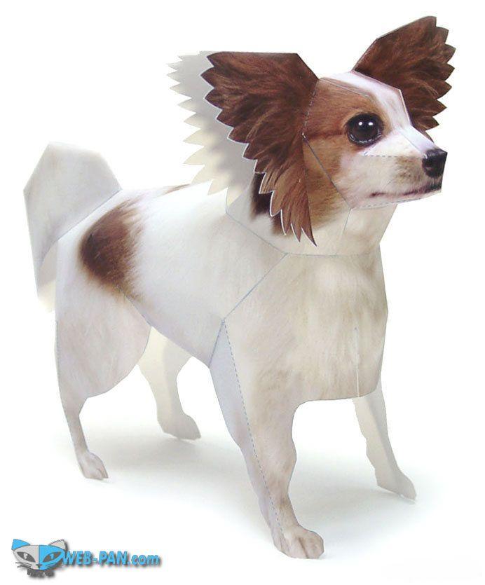 Ещё одна собачка для дамочек, прекрасный выбор!
