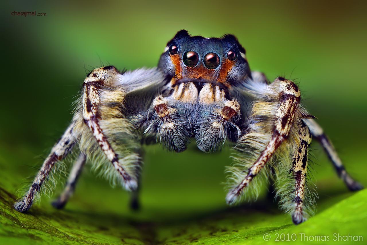 صور كائنات غريبة 2013 - صور حشرات