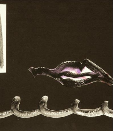 Black Lips (night)