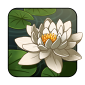 waterlily1.png