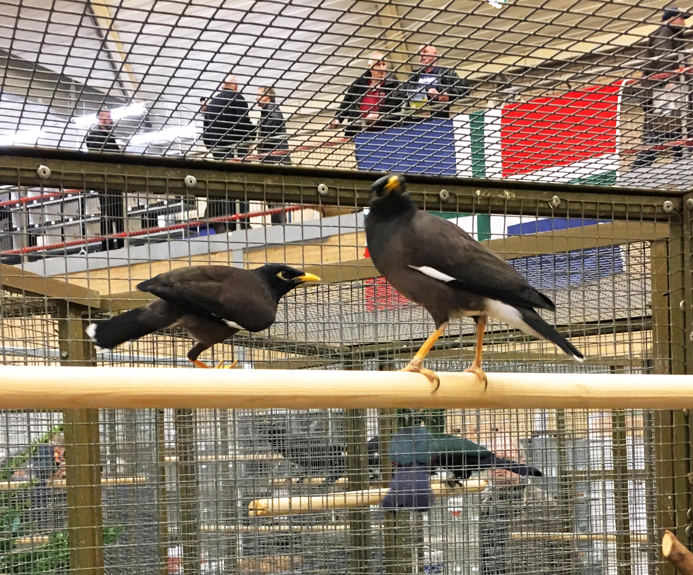 Koppel vogels