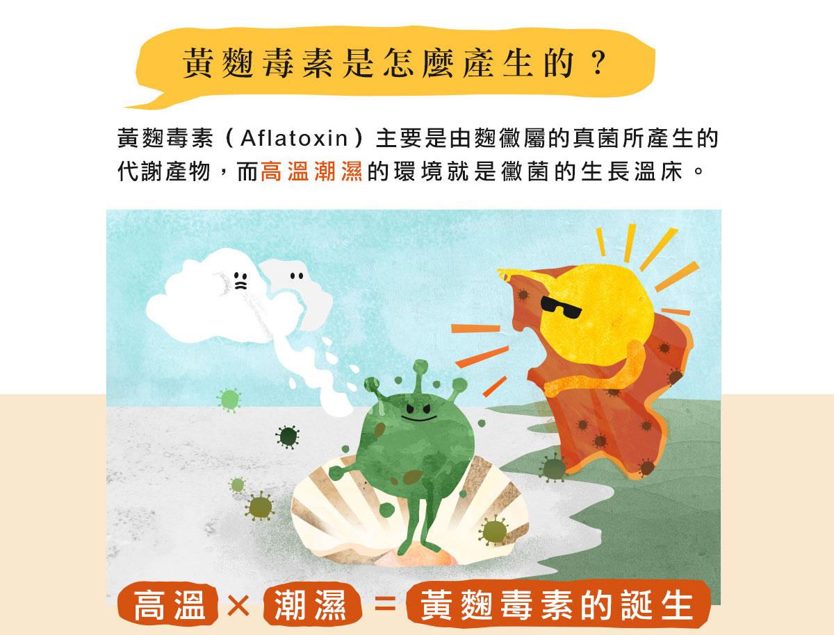黃麴毒素是怎麼產生的?黃麴毒素(Aflatoxin)主要是由麴黴屬的真菌所產生的代謝產物,而高溫潮濕的環境就是黴菌的生長溫床。