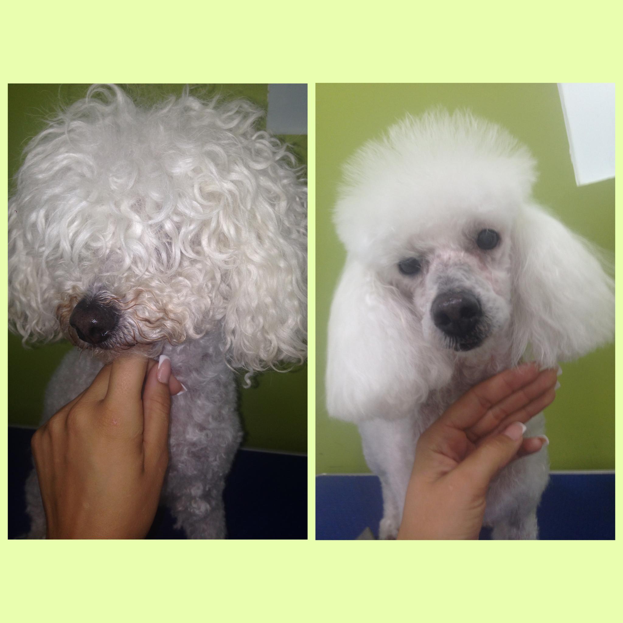 Peluquería canina: Corte de pelo