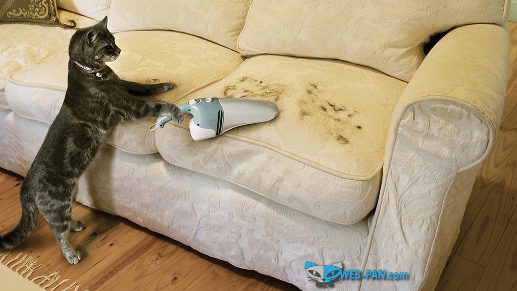 Котик убирается в доме, мечта любой хозяйки!