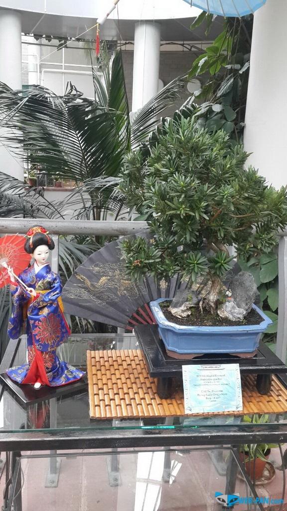 Бонсаи на выставке - фото 8