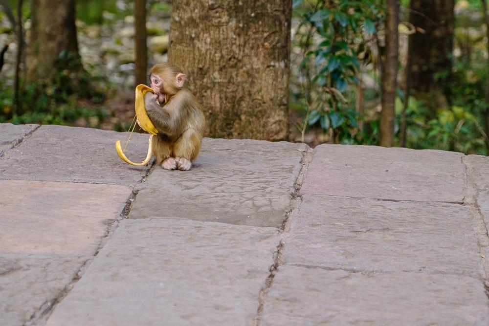 Ondanks de borden 'Voeder de apen niet' was er een kraampje met bananen en werden de beestjes flink verwend door de Chinezen. Dat wij allebei aangevallen werden door een aap die onze koekjes wilde, deed geen belletje rinkelen bij hen…