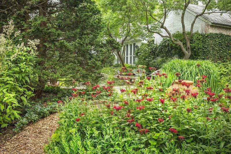 Wild gardens that grew out from Washington