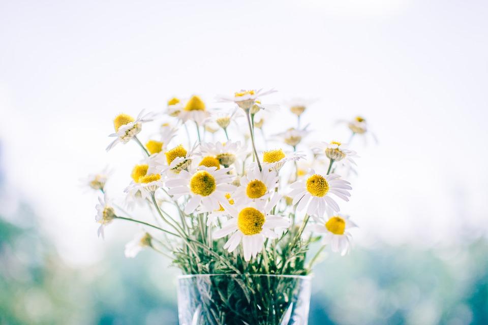 Daisy flowers in a jar