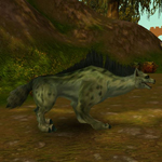 Divoká hyena Kuntů